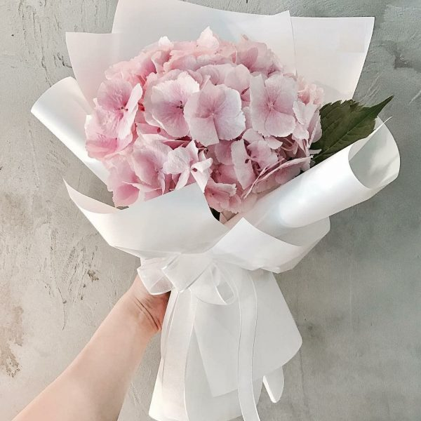 Simple Pink Hydrangea